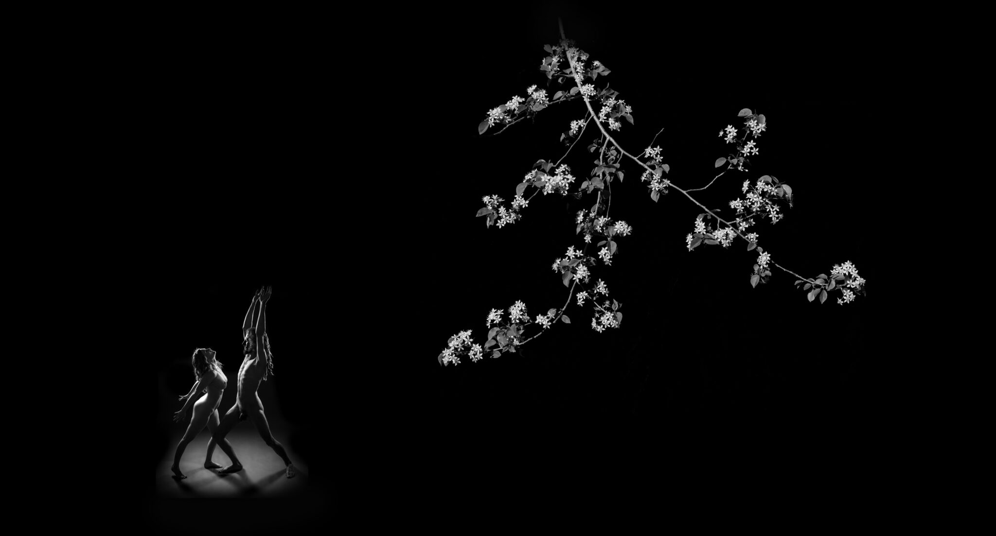 Black and white photograph of a man and woman dancing under white flowers on a branch of tree that mirrors the gesture of the human forms.