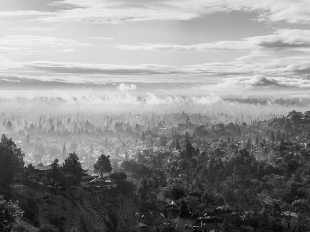 A single tree stands on a hillside against a vast foggy Silicon Valley in a black and white photograph taken by Ira Gardner from a viewpoint in San Carlos, California.