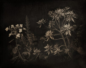 Platinum-Palladium print of botanicals taken at the U.C. Berkley Botanical Garden in November of 2018.