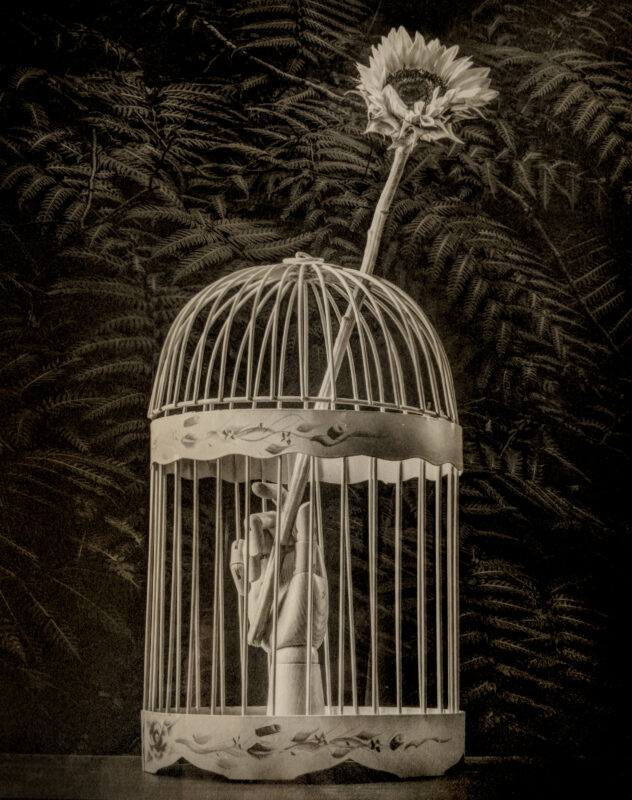 Platinum-Palladium print of a wooden hand in a bird cage that is holding a sunflower that is extended beyond the cage with a lush dark jungle in the background.