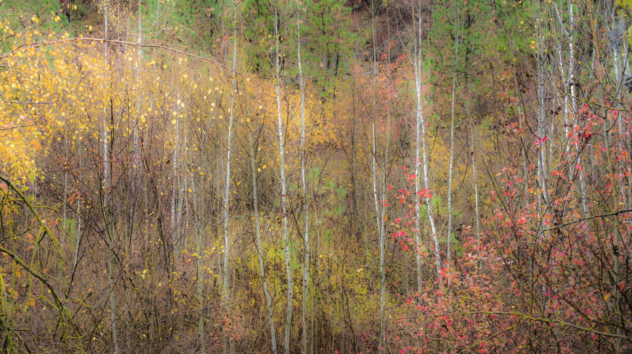 Image of Autumn leaves in a forest