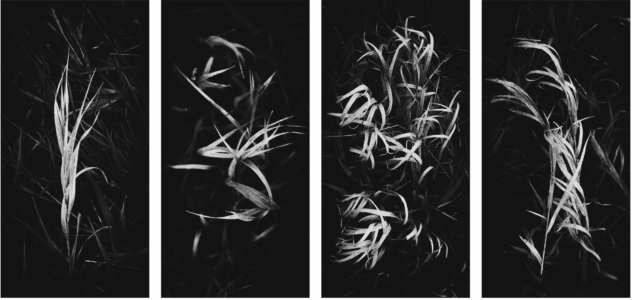 Image of 4 four by eight panels featuring abstract photographic studies of grass.