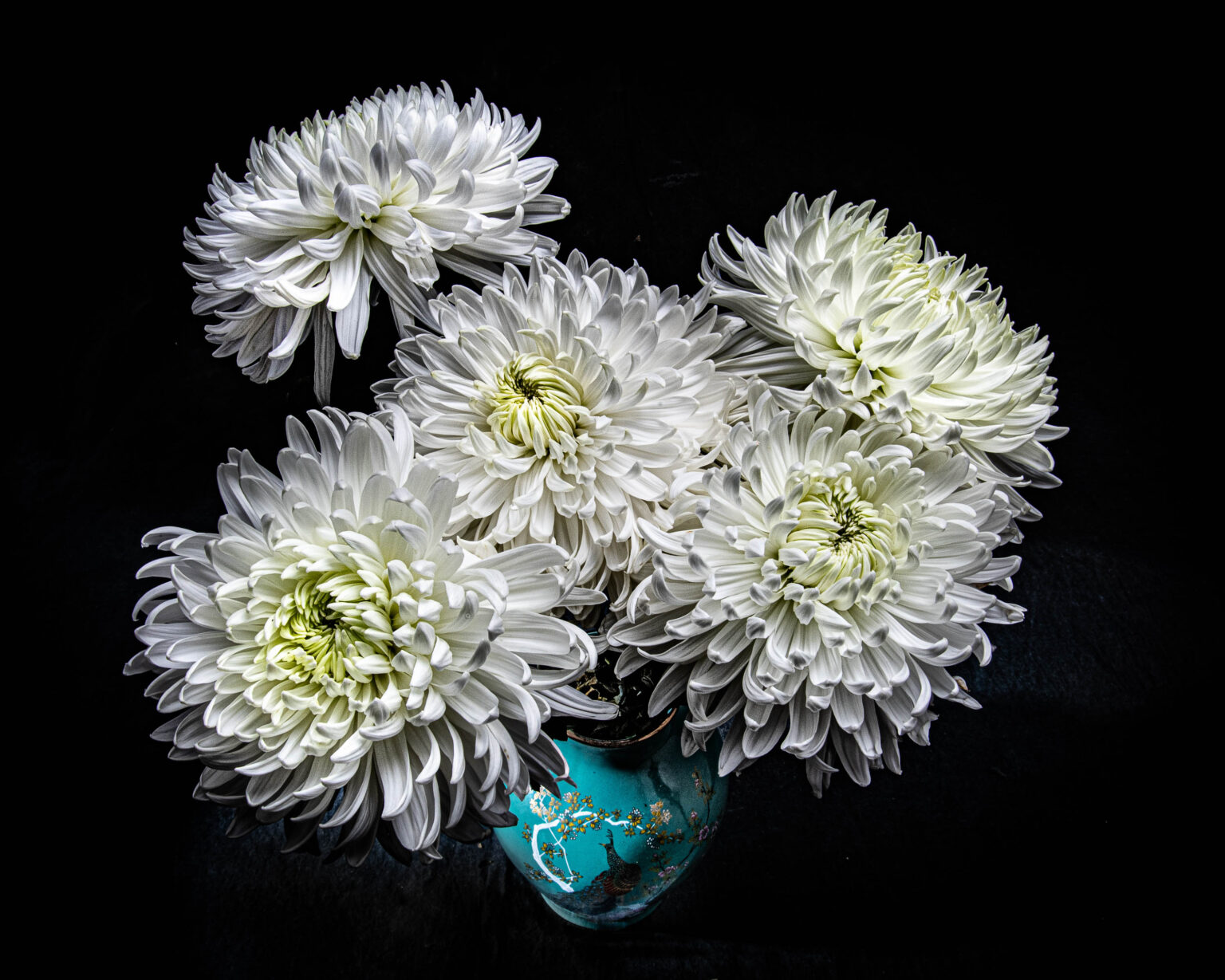 Photograph of a group of white chrysantemums in a teal blue vase decorated with a peacock.